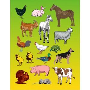 Stickers – Farm Animals, 25 sheets